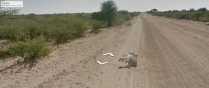 Google desmiente que haya atropellado a un burro en Botsuana (Foto)