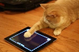 Aplicaciones de iPad para gatos no atraen a los felinos