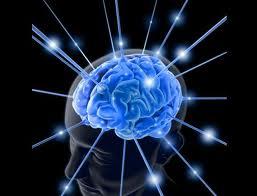 Investigadores logran hacer transparente un cerebro