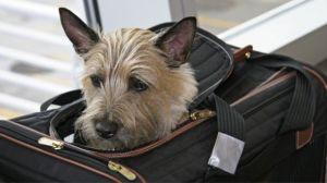 Nueva York tendrá el primer aeropuerto para animales