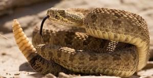 """¿Lo logró? Se encerró más de 70 horas con 72 serpientes venenosas para """"demostrar"""" que son amigables"""