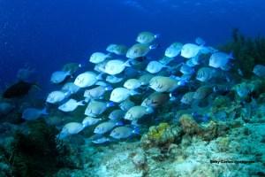 Una nueva hormona sexual en los peces podría ayudar en tratamientos de fertilidad