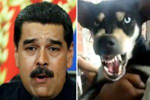 """EN VIDEO: Chavista asiste a marcha a favor de Evo porque """"le gustan mucho los perros"""" (WTF)"""