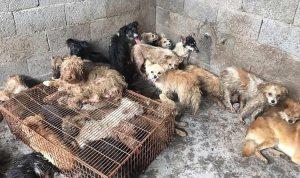 Rescataron de un matadero a 62 perros que iban a ser cocinados en un festival de China
