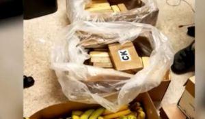 Hallaron casi 50 kilos de cocaína en cajas de cambures en Washington