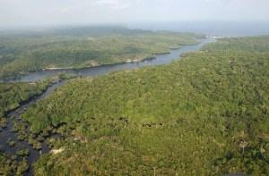 CINCO COSAS a saber sobre la Amazonia para comprender la gravedad del incendio