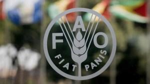 FAO: Venezuela es el país donde más aumentó la desnutrición en Latinoamérica