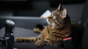 """¡INSÓLITO! Olvidó cerrar la ventana de su carro y unos gatos """"hicieron fiesta"""" allí adentro (Video)"""