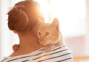 Los gatos ven a los humanos como sus padres y no son tan independientes como creías