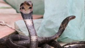 Las serpientes serían el origen del brote del coronavirus de Wuhan