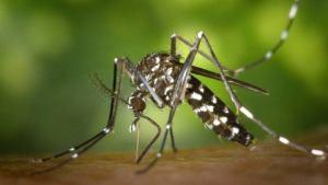 Alerta de enfermedad transmitida por mosquitos para Miami-Dade