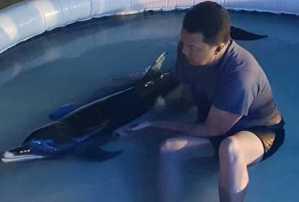 Delfín rescatado por Waterland en Venezuela falleció pese a esfuerzo de salvarle la vida