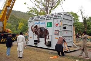 El elefante maltratado en Pakistán será trasladado a Camboya