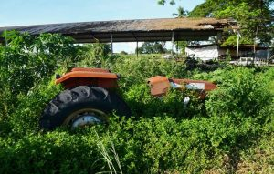 La Ruta del Hambre: Un recorrido por la inseguridad alimentaria en Venezuela desde el campo hasta la mesa