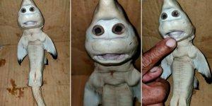 """Encontraron en Indonesia una extraña cría de tiburón con """"rostro humano"""""""