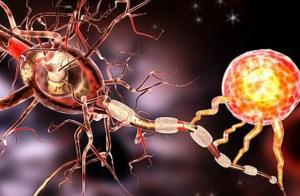 """Qué son las """"neuronas abuela"""" que asombran a los científicos"""