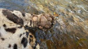 Horror en Brasil: Lanzaron de un puente a jaguar vital para preservar la especie