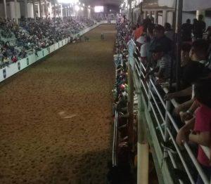 ¿Y el coronavirus? Gobernación de Guárico promovió campeonato de toros coleados sin medidas sanitarias (VIDEO)